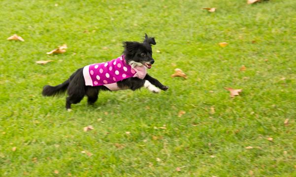 Lola at Play