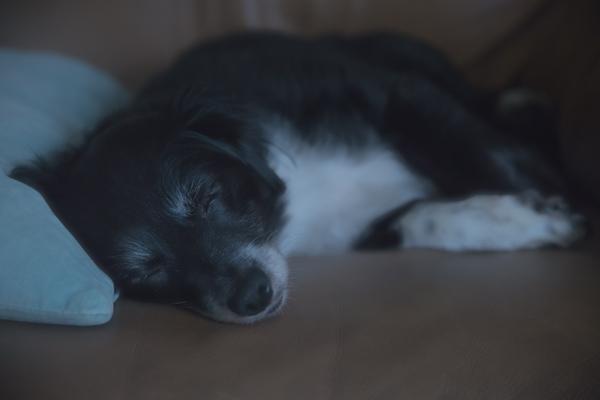 Sleeping Dog | thecozyapron.com