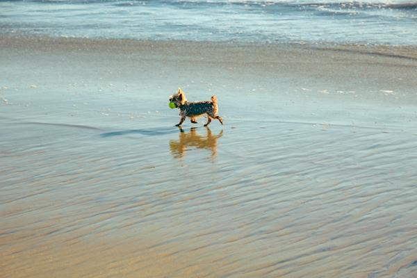 Little Dog Playing Fetch | thecozyapron.com