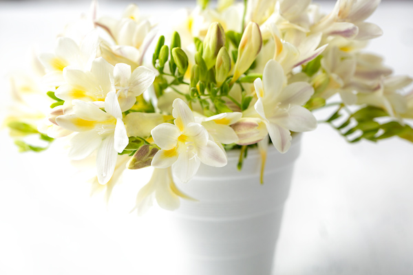 From the Heart: The Mystery of the Flowers in the Cup