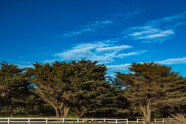 Pines, Cambria, California | thecozyapron.com