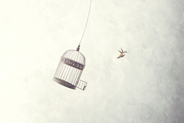 Little bird flying away from cage | thecozyapron.com