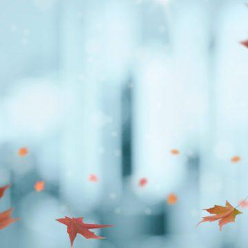 Leaves falling on a wintery backdrop | thecozyapron.com