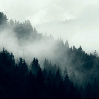 Mountain Mist | thecozyapron.com
